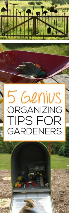 Check out these 5 Genius Organizing Tips for Gardeners.  If you have trouble with losing tools or having them scattered around your garage, learn these simple tips that will help you be more organized.  CLICK to check out a great gardening website!