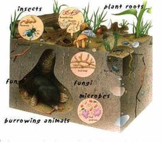 Learn About the Biology & Cycles of Soil Life | Science | Learnist