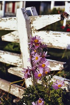 weathered slat fence / flowers