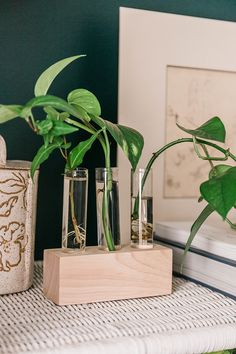 Did you know that you can successfully propagate new plants from existing houseplants? Below, we share an easy way to DIY a wood and glass propagation station — and then, check out our growing tips and advice to help get you started. Golden Pothos, Garden Soil, Gardening, Root System, Fiddle Leaf Fig, Diy Holz, Cactus Y Suculentas, Plant Species, Plant Care