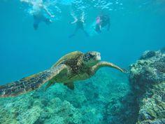 Maui Snorkeling. #Maui #PictureMaui