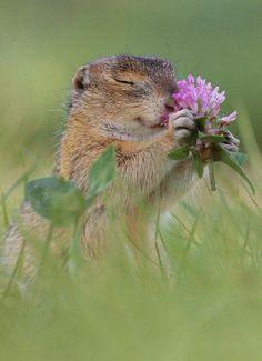 Happy Animals, Nature Animals, Cute Baby Animals, Animals And Pets, Funny Animals, Beautiful Creatures, Animals Beautiful, Photo Animaliere, Squirrel Girl