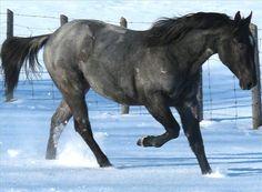 Equine.com's featured #horseforsale in Southampton, Ontario, Canada  #QuarterHorse #RanchHorse