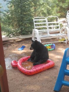 And finally, because this is what they look like when they contemplate life in a baby pool.