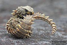 El desierto debido a sus duras condiciones para cualquier tipo de vida es el hogar de diferentes y peculiares especies de animales. Un ejemplo es el l...