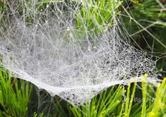 The water droplet displays some surprising qualities, particularly when captured by a marvellous spider's web.