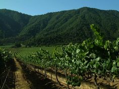 Emiliana - Organic Vineyards - Excellence in Nature in the Casablanca Valley Chile, Organic Wine, I Want To Know, Cabernet Sauvignon, Casablanca, Natural, Vineyard, Places To Go, World
