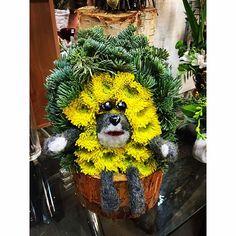 Ёжик из живых цветов от Цветочной Студии АГАВА