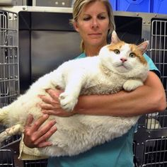 Meow the obese cat