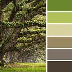 Nature's color chart is always harmonious. Gray-brown to lush green.