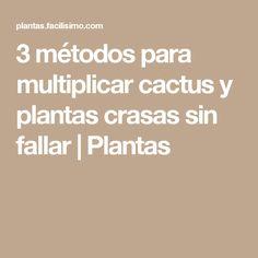 3 métodos para multiplicar cactus y plantas crasas sin fallar | Plantas