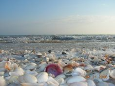 "Sanibel Island, FL!  One of my favorite places on earth!  I must have my ""seashell fix"" at least once a year."