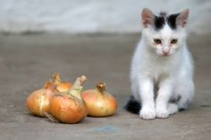 6 Everyday Foods that Are Toxic to Cats | Catster