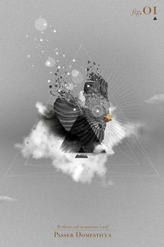 To throw salt on sparrow's tail by david benmussa, via Behance