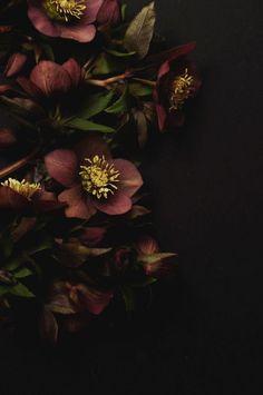 Hellebores by Jennie Prince