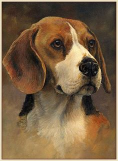 Are you interested in a Beagle? Well, the Beagle is one of the few popular dogs that will adapt much faster to any home. Art Beagle, Beagle Puppy, Cute Dog Photos, Dog Pictures, Bird Drawings, Animal Drawings, Mundo Animal, Dog Portraits, Portrait Paintings
