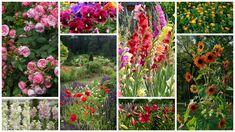 Flori care se planteaza primavara. Cum sa ai o gradina plina de culoare toata vara