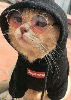 Dj wali babu mera gana to chala do😉 - Outfits Für Teenager - Gatos Cute Funny Animals, Cute Baby Animals, Animals And Pets, Cute Dogs, Funny Cats, Farm Animals, Cute Cats And Kittens, Cool Cats, Kittens Cutest