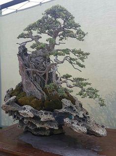 Bonsai Art, Bonsai Garden, Bonsai Trees, Ikebana, Artificial Rocks, Stop Motion, Backyard Patio, Grass, Flora