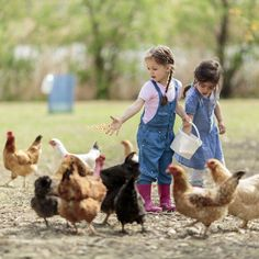 Advice for Starting a Small Farm Business - Homesteading and Livestock - MOTHER EARTH NEWS