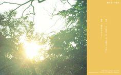 壁紙 | 映画『陽だまりの彼女』