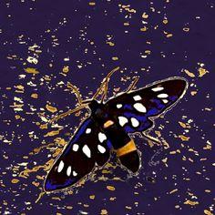 andrea mattiello elaborazione digitale 2017 #andreamattiello #butterfly #amataphegea #arte #contemporanea #contemporaryart #emerging #artist #artista #emergente