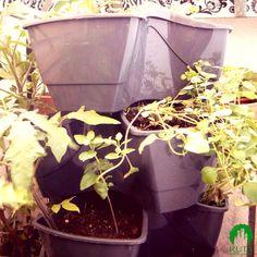 Doniczka kaskadowa. Sprawdza się przy uprawie ziół i karłowatych pomidorów :)