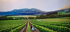 Choose a wineland wedding venue in Cape Town, Stellenbosch, Franschhoek or Paarl. Wedding Backdrops, Wedding Venues, Somerset West, Mountain Range, Cape Town, Farms, South Africa, Holland, Landscapes