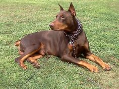 Swear this dog is identical from my dog pyro!