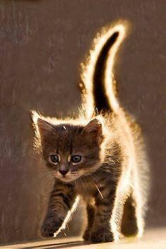 kitten…..