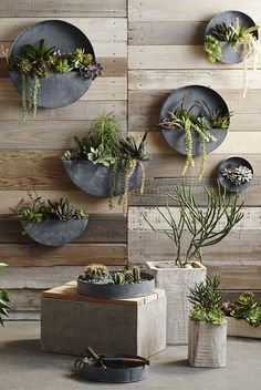 These playfully shaped planters are crafted from galvanized iron with an aged zinc finish, making them perfect receptacles for water-wise succulent gardening. Mix sizes for an eye-catching living wall #livingwall