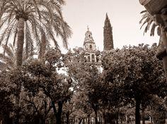 Córdoba - Patio de los Naranjos