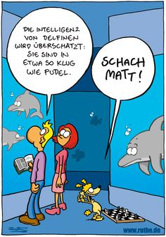 Intelligenz von Delphinen btw. :-) #Morgenlacher