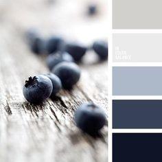 Blueberries color of blue.   Color inspiration for design, wedding or outfit. More color pallets on color.romanuke.com.