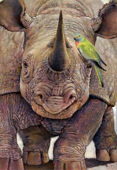 rhino and friend By Catherine Huerta The rhino is now an endangered specie