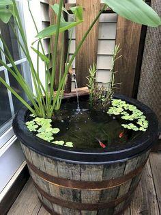 Back Garden Design Idea