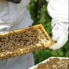 I want to one day, harvest my own honey. I wanna suit up and handle a bunch of bees...