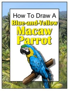 how to draw a macaw parrot