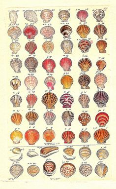 Shells, Possible tattoo idea. A reminder of all the great beach vacations in my childhood