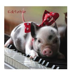 The key to scratching a piglets belly...