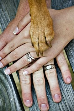 Sentimental Wedding Ideas You'll Love Your dog is a part of the family — show his important role in your wedding photos!Your dog is a part of the family — show his important role in your wedding photos! Wedding Pics, Wedding Engagement, Engagement Photos, Our Wedding, Dream Wedding, Trendy Wedding, Wedding Album, Wedding Hands, Wedding Dresses
