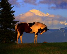 Mount Baker Washington Sunset After Several Days Of Spring Rain.  Nature Photography & Musings by Bern'e Krausse
