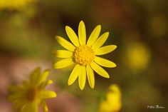 Yellow by Malhas©, via Flickr