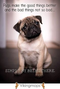 Pug #14 Poster Black White Picture Sweet Funny Dog Pet Photo Puppy Friend Print