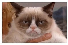 """17 Cat GIFs That Will Make You Say """"Me As A Cat"""""""