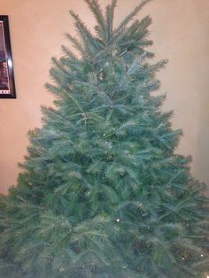 in 2012 46 million christmas tree seedlings were planted by us growers more than 2000 trees are usually planted per acre on average 1000 - How Many Christmas Trees Per Acre