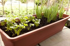 Saiba quais os erros mais comuns em jardinagem e cuide da saúde de suas plantas - Casa e Decoração - UOL Mulher