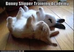 Attack Of The Funny Animals - 33 Pics