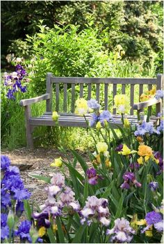 Irises and garden bench