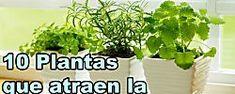 Las plantas que dan buena suerte son...